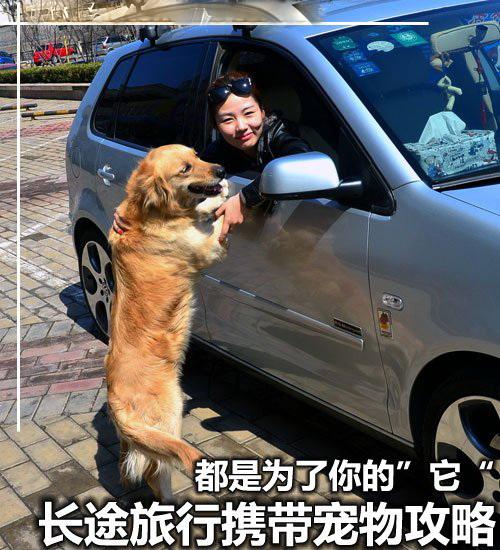 """为了你的""""它"""" 长途旅行携带宠物攻略 汽车之家"""
