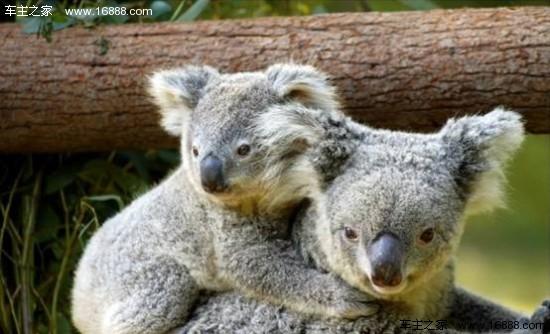 """长隆野生动物世界生活着以""""十大世界珍稀动物国宝""""为代表的500"""