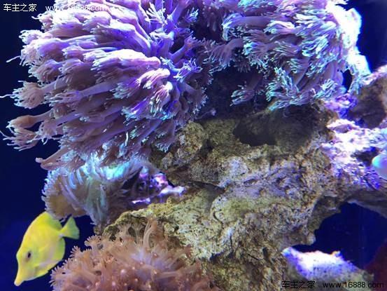 壁纸 海底 海底世界 海洋馆 花 水族馆 桌面 553_415