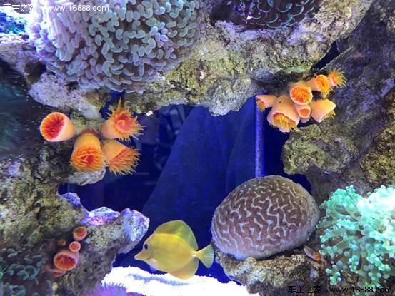 壁纸 动物 海底 海底世界 海洋馆 水族馆 鱼 鱼类 553_415